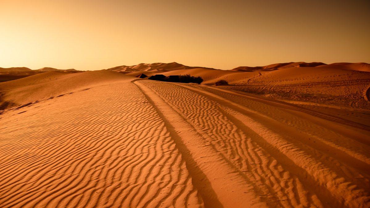 Desert-rally-gazelles